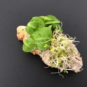 vegán gombakrémes szendvics